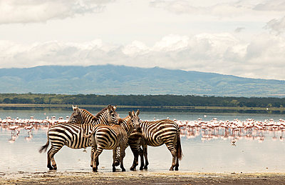 National park in Kenia - p5330297 by Böhm Monika