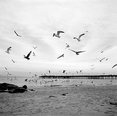 Voegel am Strand von Coney - p627m672313 by Kirsten Nijhof