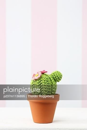 Mein kleiner grüner Kaktus - p237m1136895 von Thordis Rüggeberg