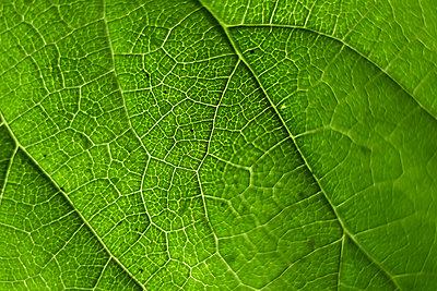 Full frame shot of green leaf - p1166m1542252 by Cavan Social