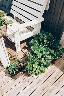 Strawberries growing - p1507m2099977 by Emma Grann