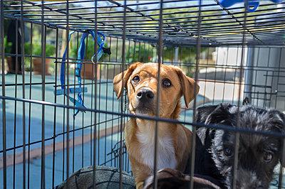 Roaming dog - p1293m1122723 by Manuela Dörr