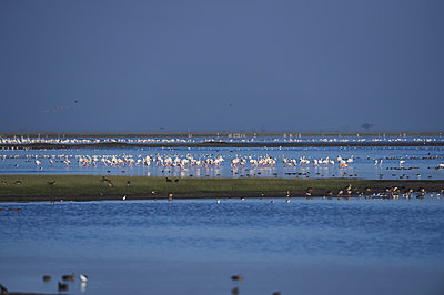 Flamingos auf dem Lake Amboseli, Kenia - p706m2158425 von Markus Tollhopf