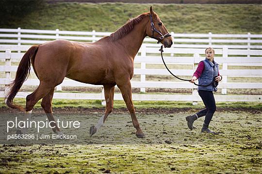 Girl leading horse around paddock