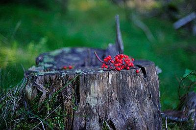Beeren im Wald - p8290183 von Régis Domergue