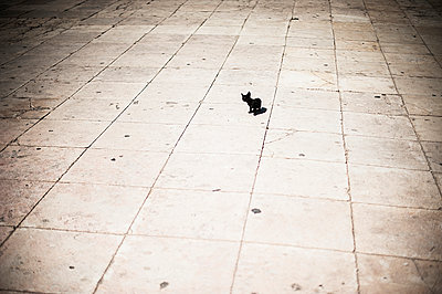 Little black cat - p1007m886831 by Tilby Vattard