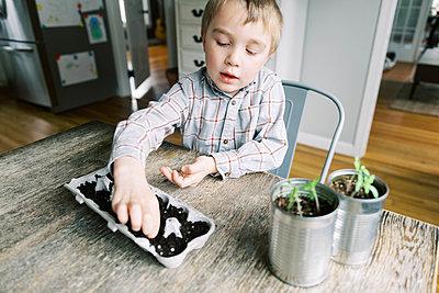 Five year old boy starting jalapeño seedlings. - p1166m2171521 by Cavan Images