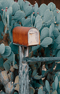 Rusty Mailbox on Wooden Post in Cactus Plant - p1617m2237806 by Barb McKinney