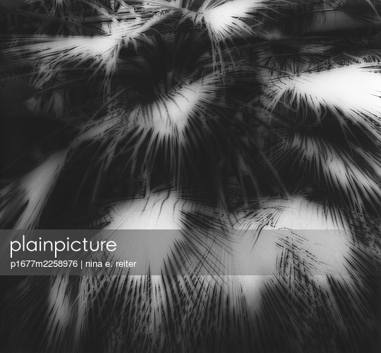 Palm leaves, light and shade - p1677m2258976 by nina e. reiter