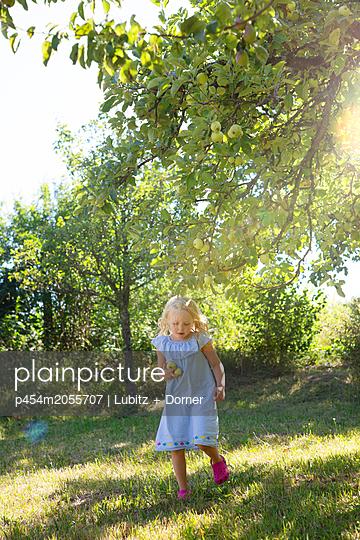 Äpfel sammeln - p454m2055707 von Lubitz + Dorner