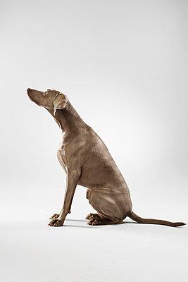 Hunting dog - p4030478 by Helge Sauber