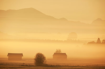 Morning fog in the country of Berchtesgaden - p533m1573834 by Böhm Monika