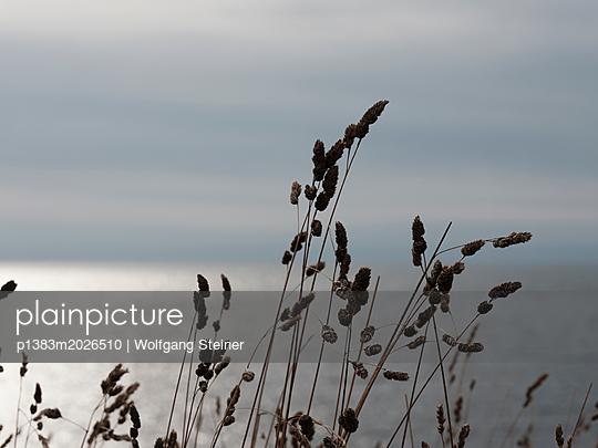 Vertrocknete Grashalme an der Küste - p1383m2026510 von Wolfgang Steiner