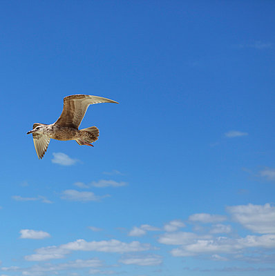 Seagull - p045m813487 by Jasmin Sander