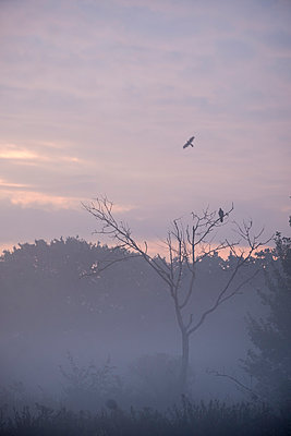 Birds in morning mist - p739m1487202 by Baertels
