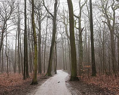 Woodland path - p1214m2229879 by Janusz Beck
