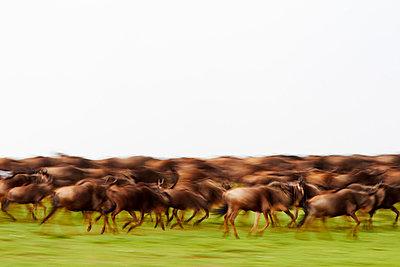 Kenya - p7190162 by Rudi Sebastian