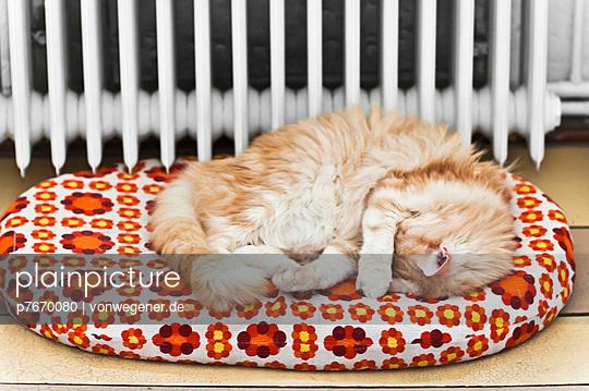 Furry cat