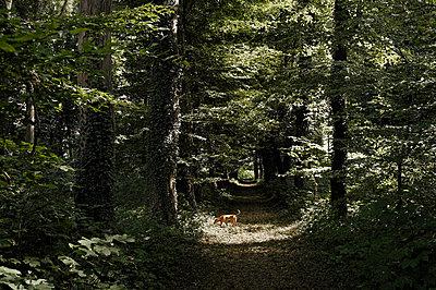 Forest road - p751m1584769 by Dieter Schwer