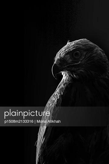 Silhouette - p1508m2133316 by Mona Alikhah