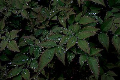 Raindrops - p1307m1225124 by Agnès Deschamps