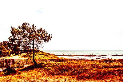 Kiefer am Meer - p1543m2291588 von Sophia Snadli