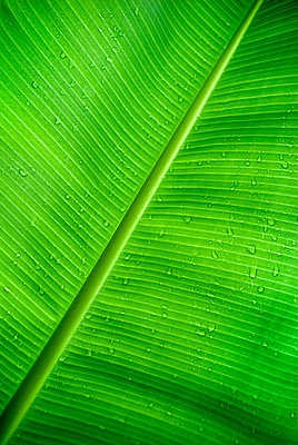 Palm Leaf - p3431167 by Peter Dennen