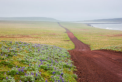 Scenic view of a red dirt road surrounded by tundra and wildflowers with foggy hills in the background, St. Paul Island, Southwestern Alaska, Summer - p442m1085025f by Kevin Smith