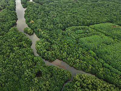 Aerial view of the mangrove forest - p1166m2094101 by Cavan Images