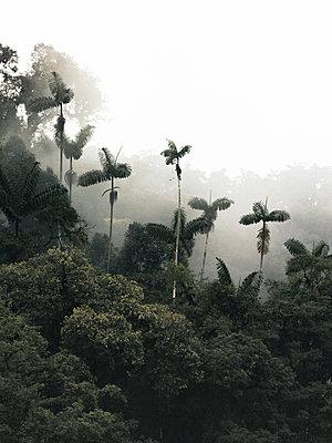 Mashpi Cloud Forest - p1166m2095385 by Cavan Images