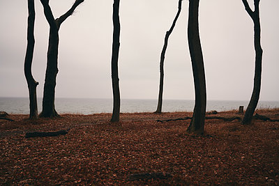 Dead trees on the waterfront, Baltic Sea - p1696m2296513 by Alexander Schönberg