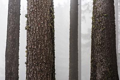 Wald - p488m1087604 von Bias