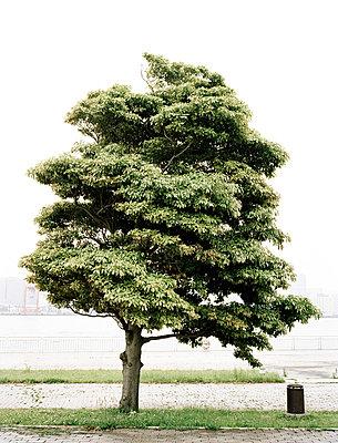 Baum in Japan - p7510005 von Dieter Schwer