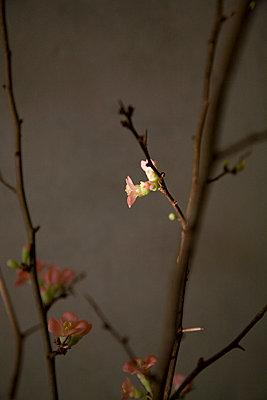 Erste Blüte - p8770028 von Julia Wagner