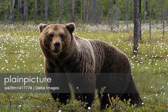 p429m1417774 von Delta Images
