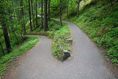 A trail divides, Columbia River Gorge National Scenic Area, Oregon, United States of America - p4429499f by Design Pics