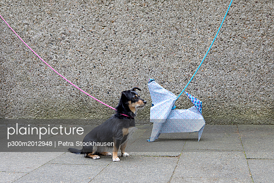 Blue origami dog and dog waiting - p300m2012948 von Petra Stockhausen