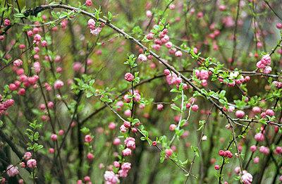Blüten im Frühling - p2120074 von Edith M. Balk