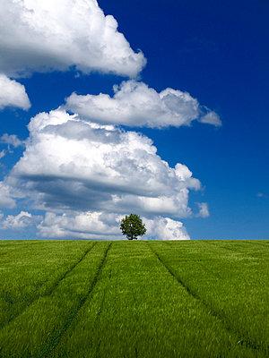 Green wheat and blue sky - p8130064 by B.Jaubert