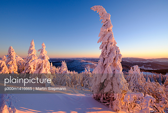Germany, Bavaria, Bavarian Forest in winter, Great Arber, Arbermandl, snow-capped spruces in the evening - p300m1416665 by Martin Siepmann