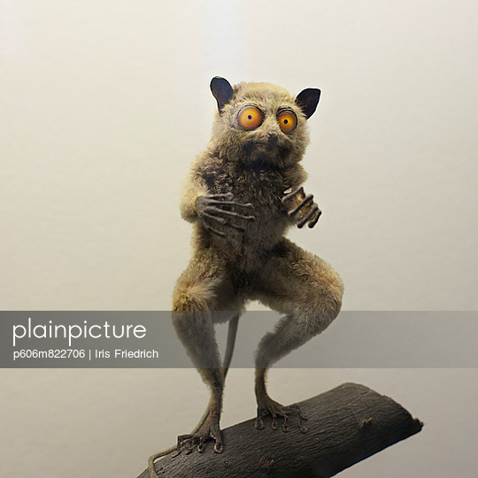 Loris - p606m822706 by Iris Friedrich