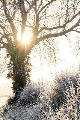 Great Britain, Early morning mist shrouds trees covered in frost  - p1057m2228711 by Stephen Shepherd