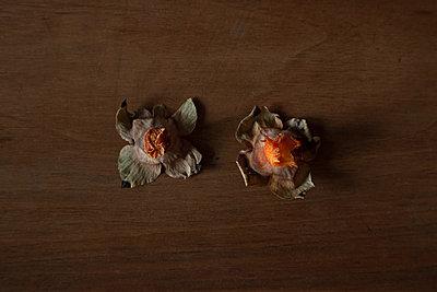 Zwei Kaki Strünke - p1650m2258641 von Hanna Sachau