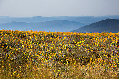 Flower meadow - p628m966216 by Franco Cozzo