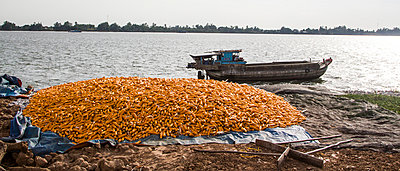 PIle of corns stocked along Mekong river in Hong Ngu area, Vietnam, Southeast Asia - p934m893103 by Andre Minoretti photography