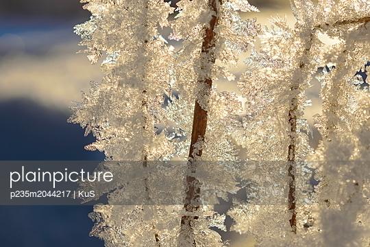 Lange Eiskristalle auf Stängeln schimmern in goldenem Sonnenlicht - p235m2044217 von KuS