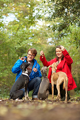 Young couple sharing treats with their three whippets - p429m895510f by Dark Horse