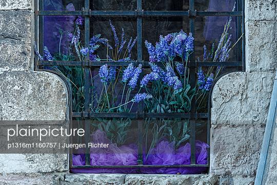 Lavendel am Fenster, Altstadt, Gubbio, Franziskus von Assisi, Via Francigena di San Francesco, Franziskusweg, Gubbio, Provinz Perugia, Umbrien, Italien, Europa - p1316m1160757 von Juergen Richter
