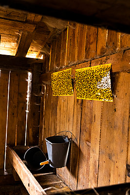 Yellow fly papers in the cow stable - p1271m2224591 by Maurice Kohl