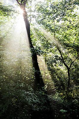 Sunlight - p1494m2141119 by Inkje Drescher